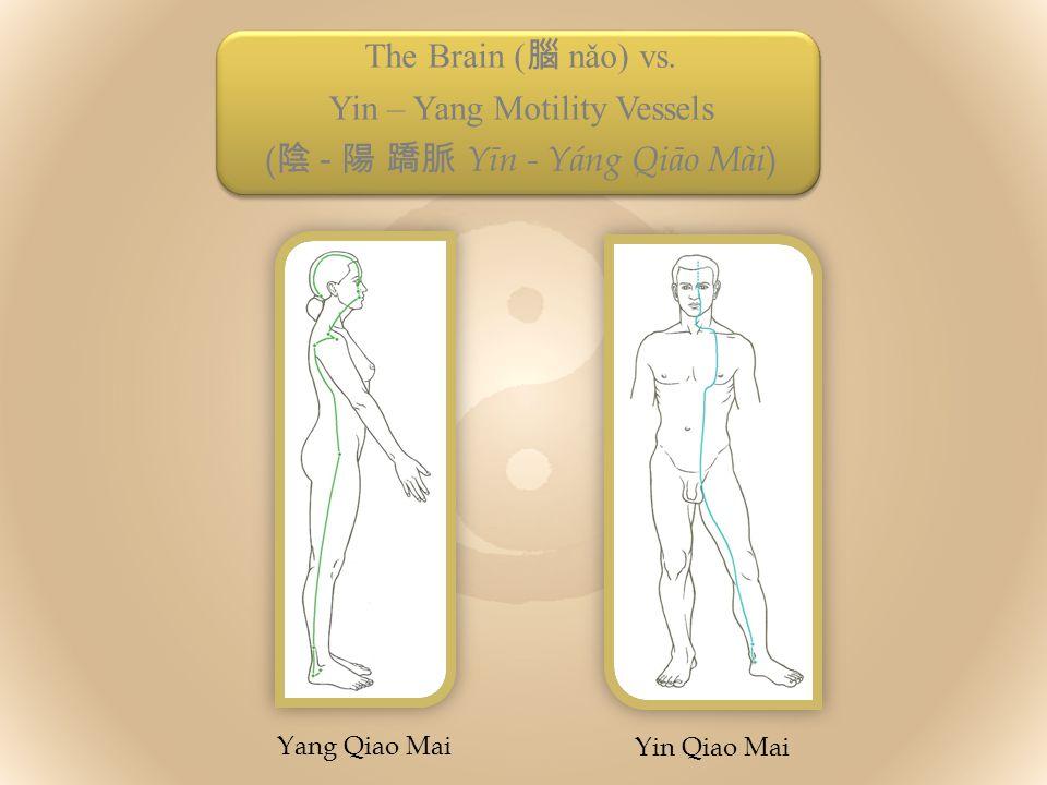 The Brain ( 腦 nǎo) vs.