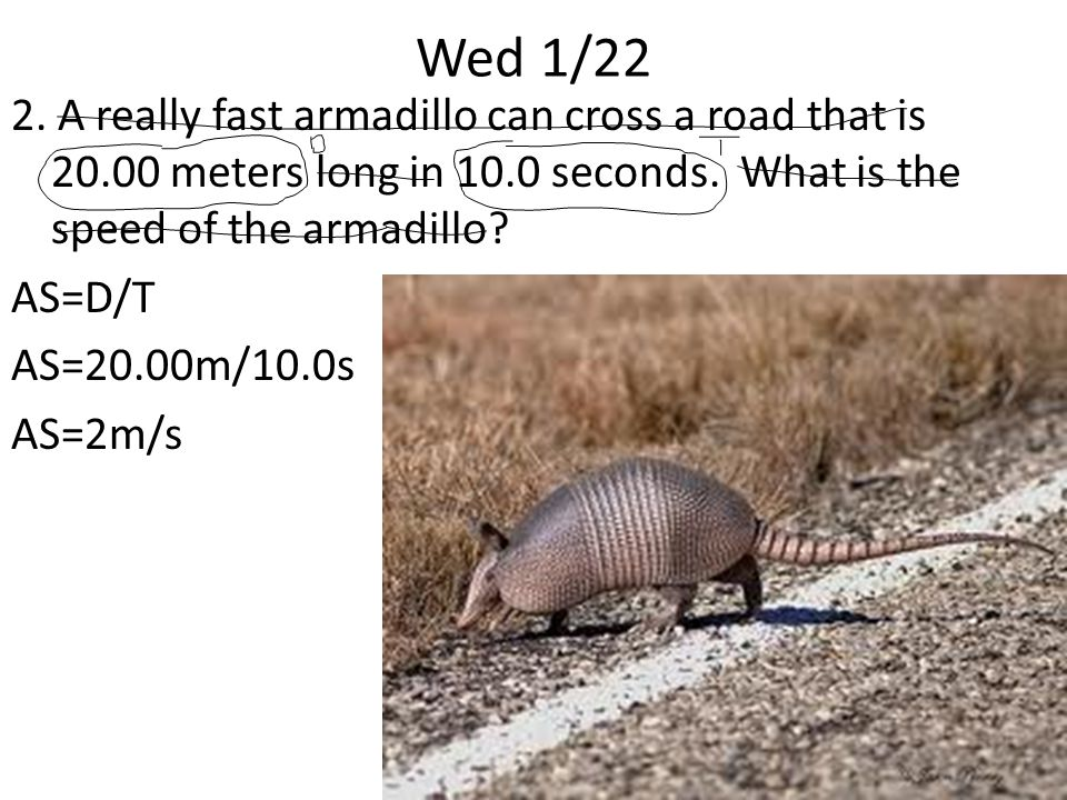 Wed 1/22 2. A really fast armadillo can cross a road that is 20.00 meters long in 10.0 seconds.