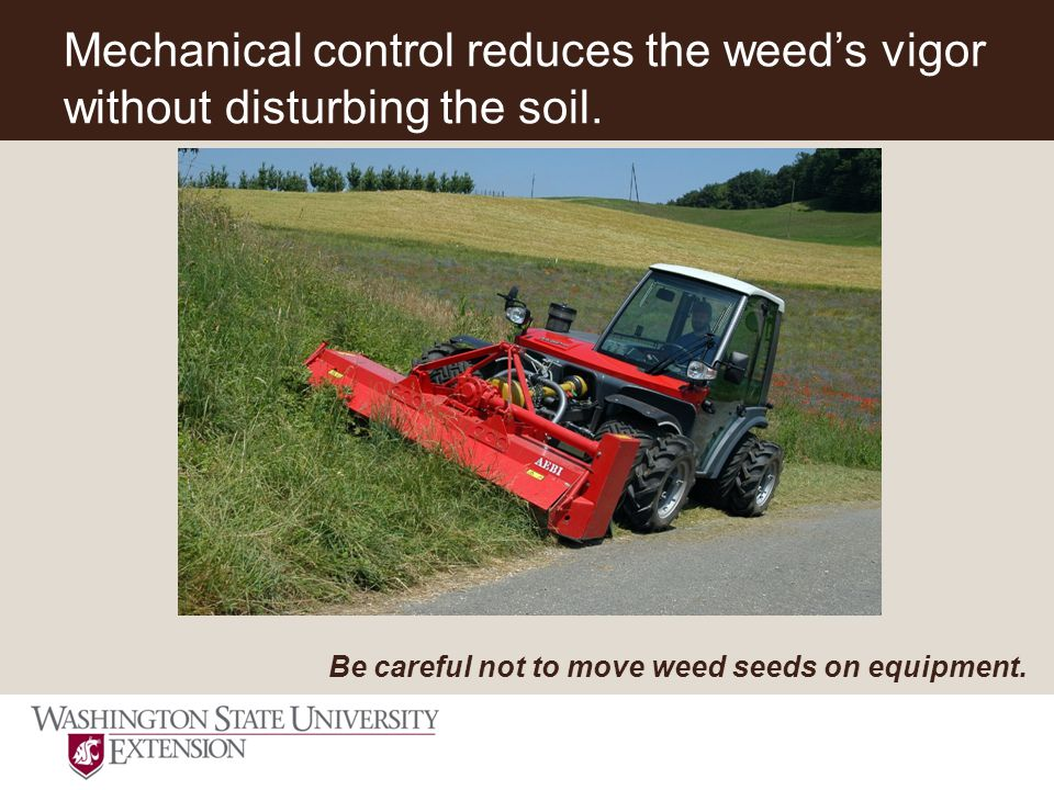 Mechanical control reduces the weed's vigor without disturbing the soil.