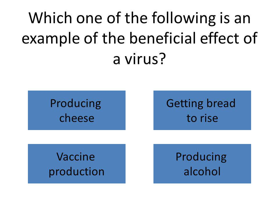 Which one of the following is an example of the beneficial effect of a virus? Producing cheese Getting bread to rise Vaccine production Producing alco