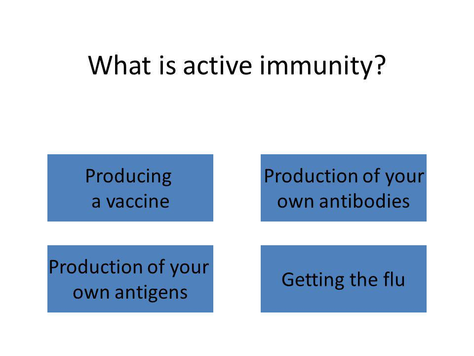 What is active immunity? Producing a vaccine Production of your own antibodies Production of your own antigens Getting the flu