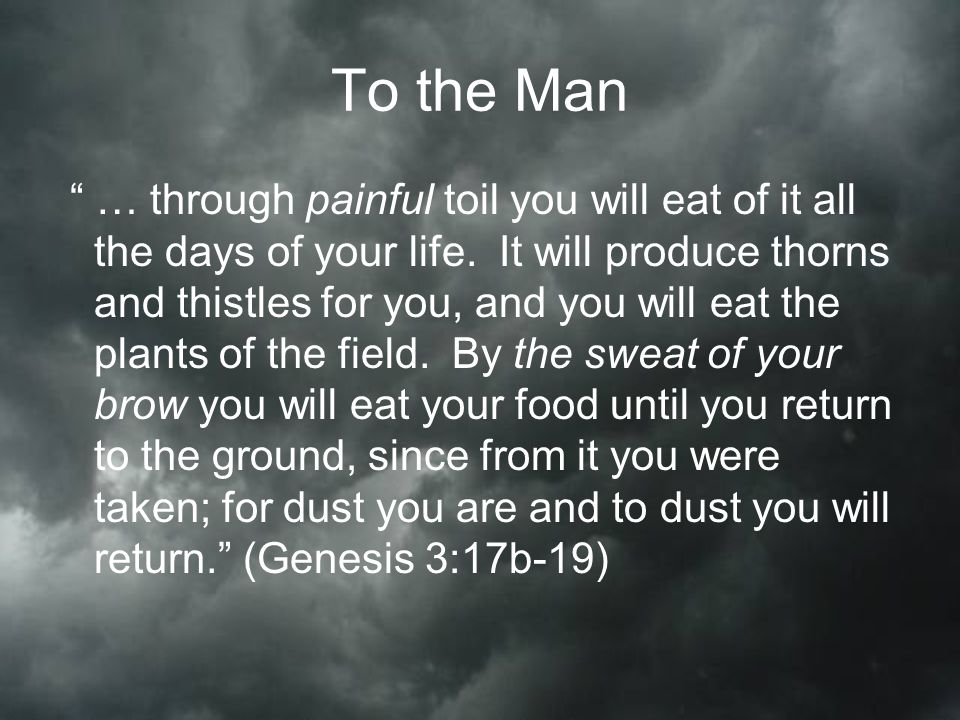 To the Man … through painful toil you will eat of it all the days of your life.