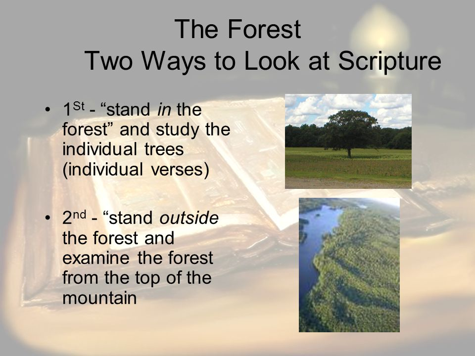 The Forest Two Ways to Look at Scripture 1 St - stand in the forest and study the individual trees (individual verses) 2 nd - stand outside the forest and examine the forest from the top of the mountain