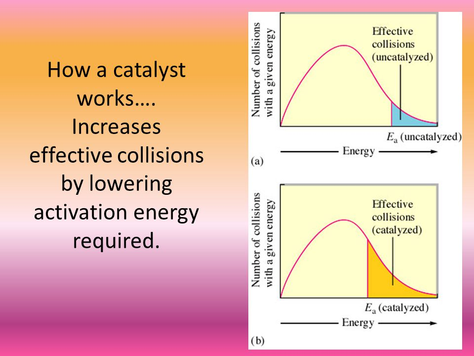 How a catalyst works…. Increases effective collisions by lowering activation energy required.
