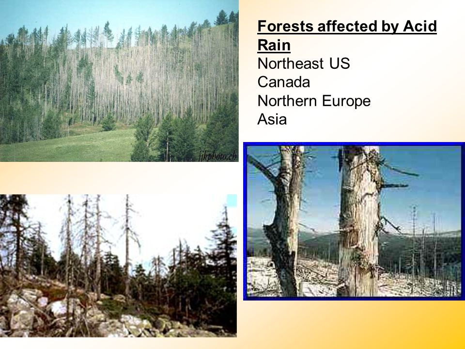 Forests affected by Acid Rain Northeast US Canada Northern Europe Asia