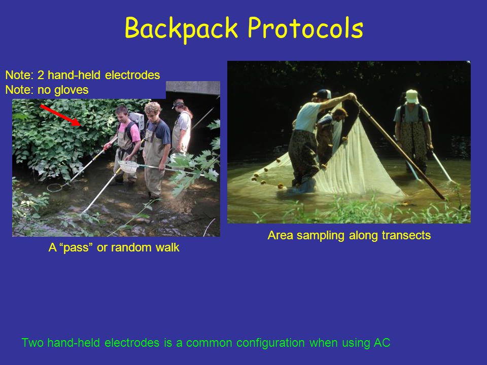 Backpack Protocols Area sampling along transects A pass or random walk Note: 2 hand-held electrodes Note: no gloves Two hand-held electrodes is a common configuration when using AC