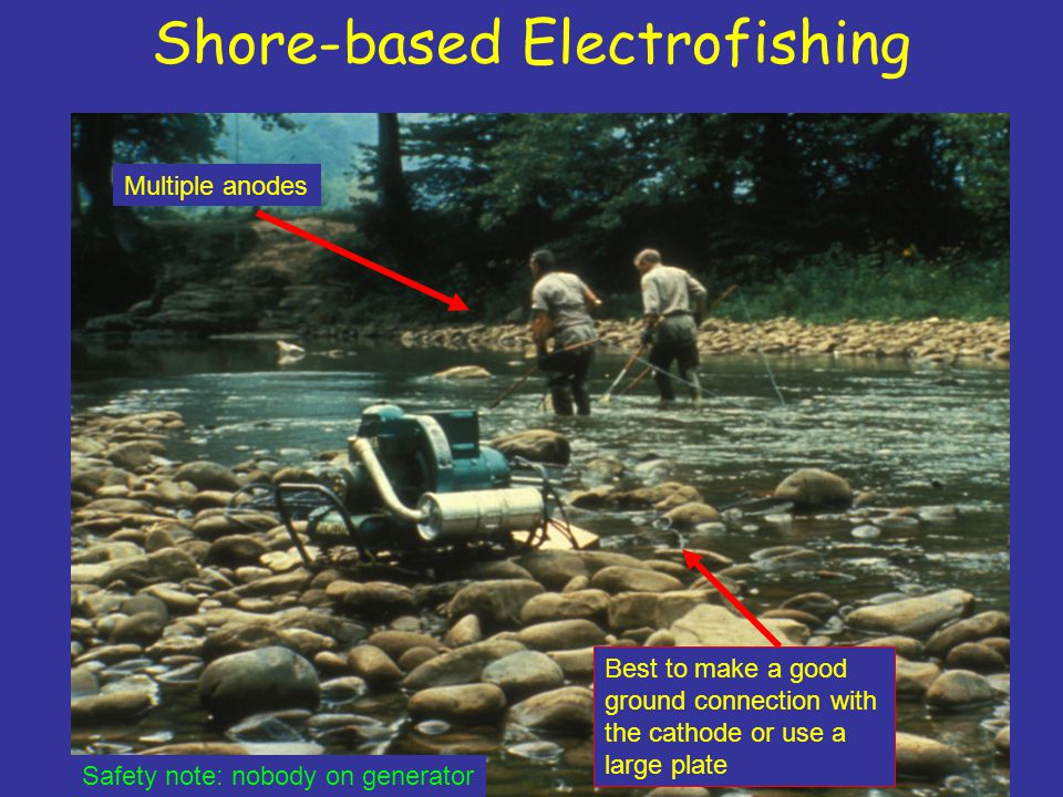 Shore-based Electrofishing Multiple anodes Best to make a good ground connection with the cathode or use a large plate Safety note: nobody on generator