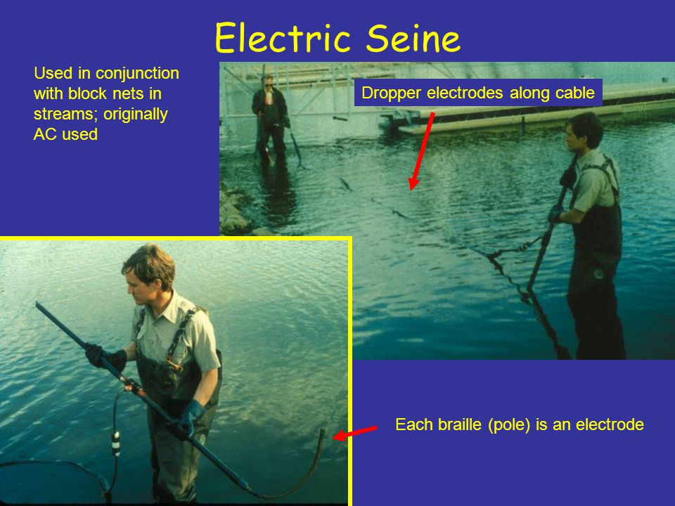 Electric Seine Dropper electrodes along cable Each braille (pole) is an electrode Used in conjunction with block nets in streams; originally AC used