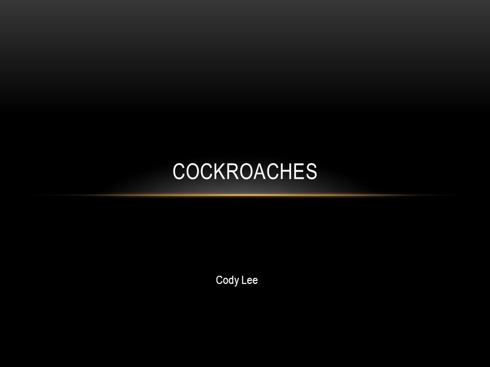 Cody Lee COCKROACHES