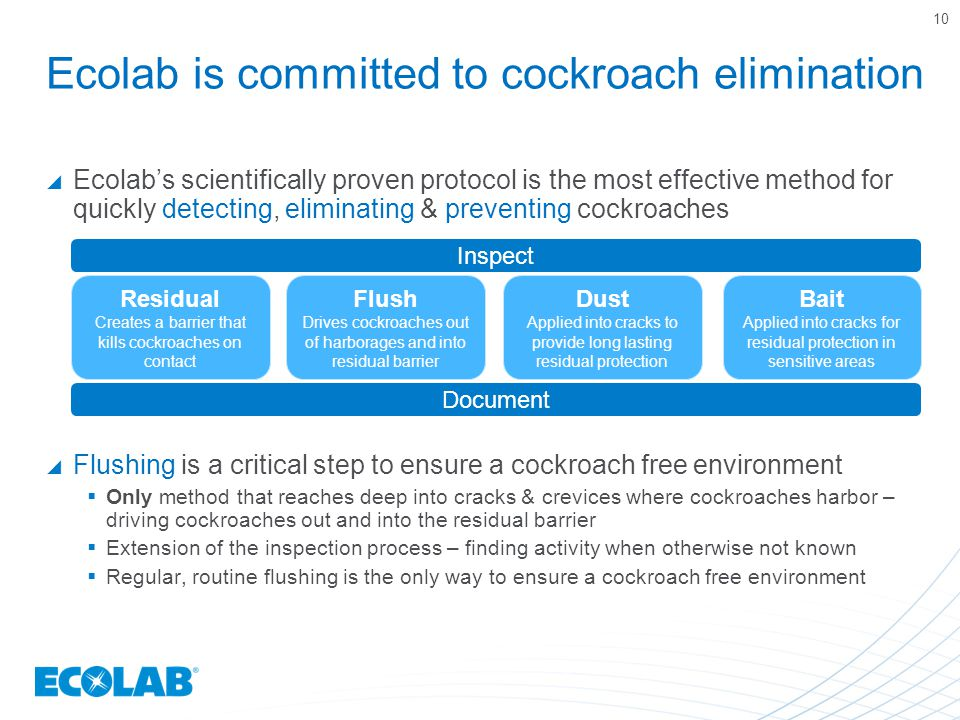 Ecolab is committed to cockroach elimination  Ecolab's scientifically proven protocol is the most effective method for quickly detecting, eliminating & preventing cockroaches  Flushing is a critical step to ensure a cockroach free environment  Only method that reaches deep into cracks & crevices where cockroaches harbor – driving cockroaches out and into the residual barrier  Extension of the inspection process – finding activity when otherwise not known  Regular, routine flushing is the only way to ensure a cockroach free environment 10 Residual Creates a barrier that kills cockroaches on contact Flush Drives cockroaches out of harborages and into residual barrier Dust Applied into cracks to provide long lasting residual protection Bait Applied into cracks for residual protection in sensitive areas Inspect Document