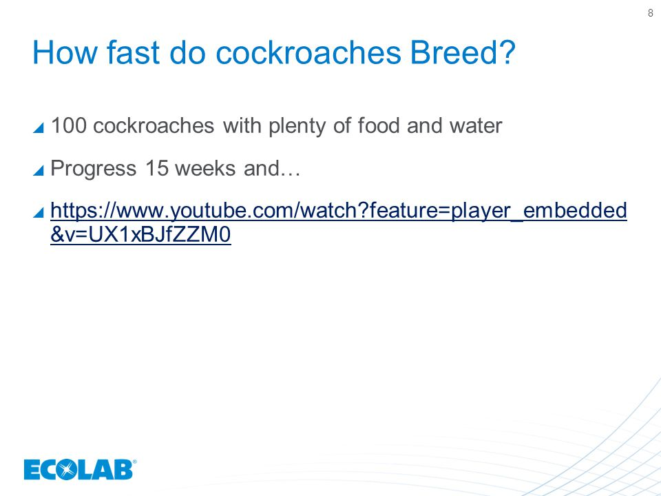 How fast do cockroaches Breed.