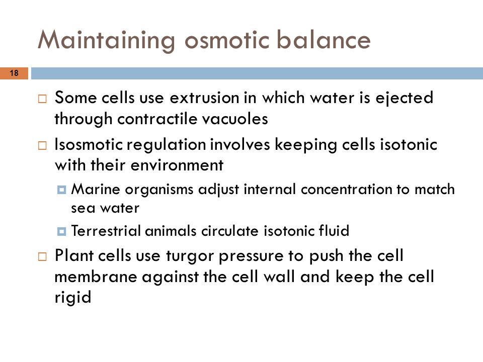 Maintaining osmotic balance 18  Some cells use extrusion in which water is ejected through contractile vacuoles  Isosmotic regulation involves keepi