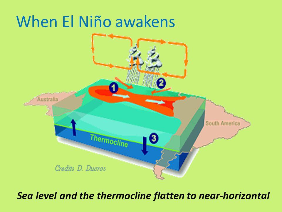 Sea level and the thermocline flatten to near-horizontal When El Niño awakens