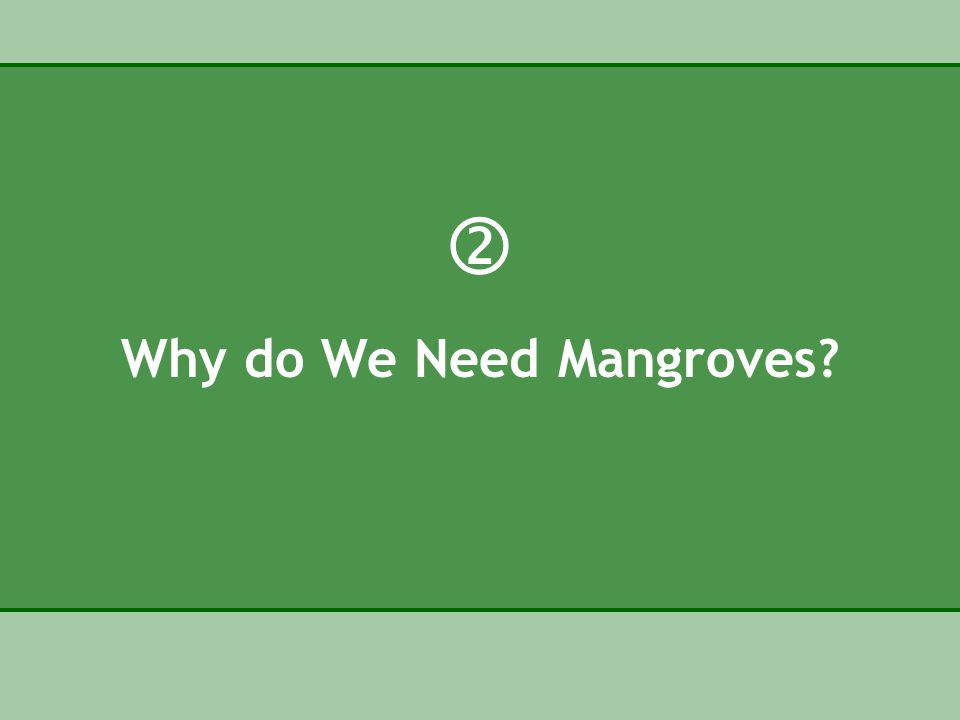  Why do We Need Mangroves
