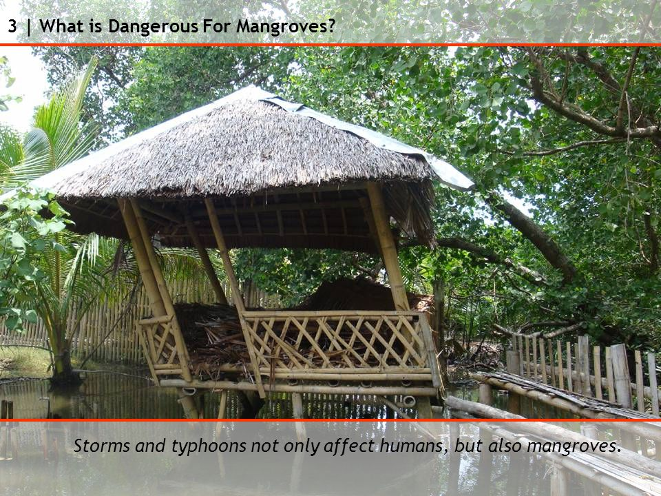 3 | What is Dangerous For Mangroves.