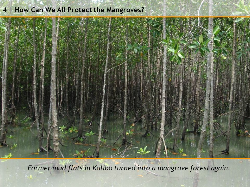 4 | How Can We All Protect the Mangroves.