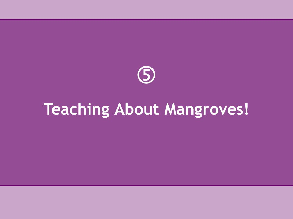  Teaching About Mangroves!