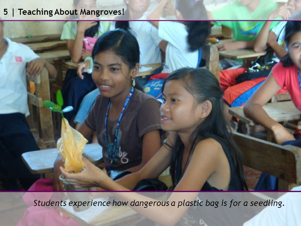 Students experience how dangerous a plastic bag is for a seedling. 5 | Teaching About Mangroves!