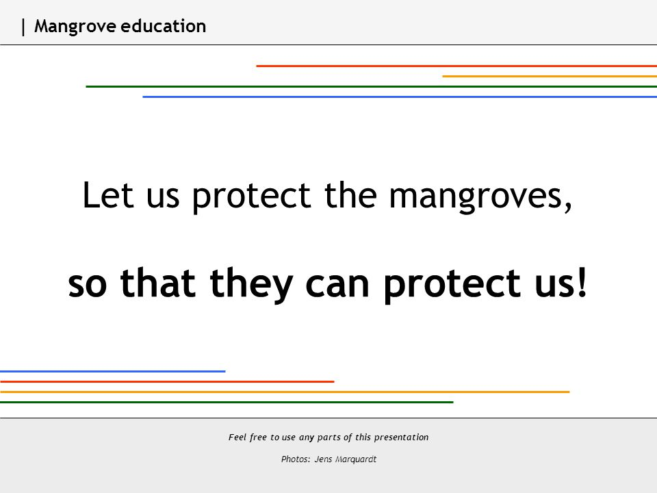 Let us protect the mangroves, so that they can protect us.