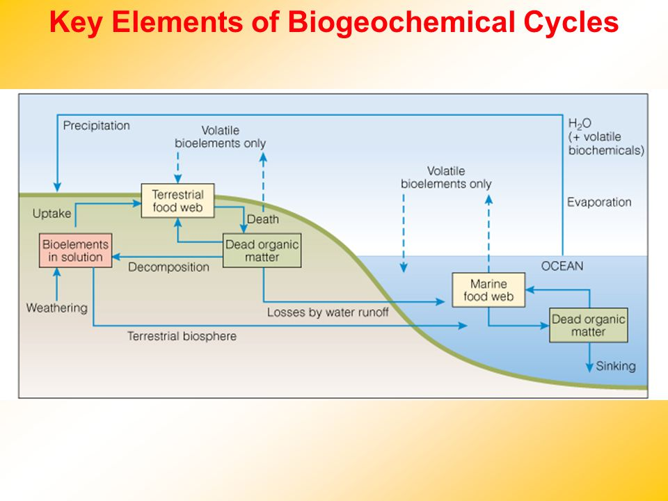 Key Elements of Biogeochemical Cycles