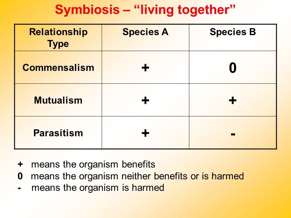Symbiosis – living together Relationship Type Species ASpecies B Commensalism +0 Mutualism ++ Parasitism +- + means the organism benefits 0 means the organism neither benefits or is harmed - means the organism is harmed