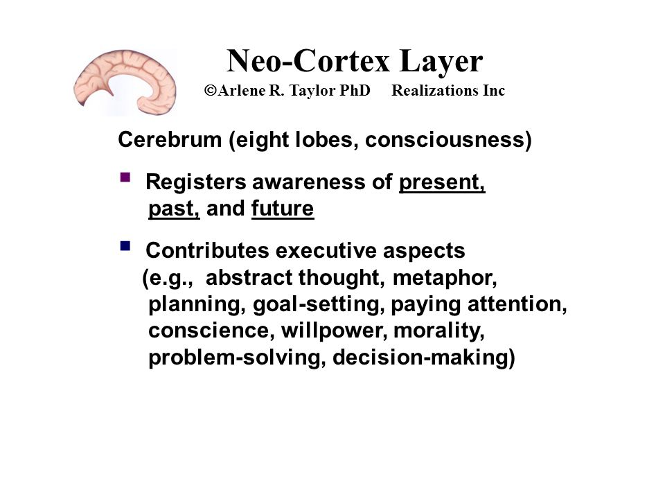 Neo-Cortex Layer  Arlene R. Taylor PhD Realizations Inc Cerebrum (eight lobes, consciousness)  Registers awareness of present, past, and future  Co