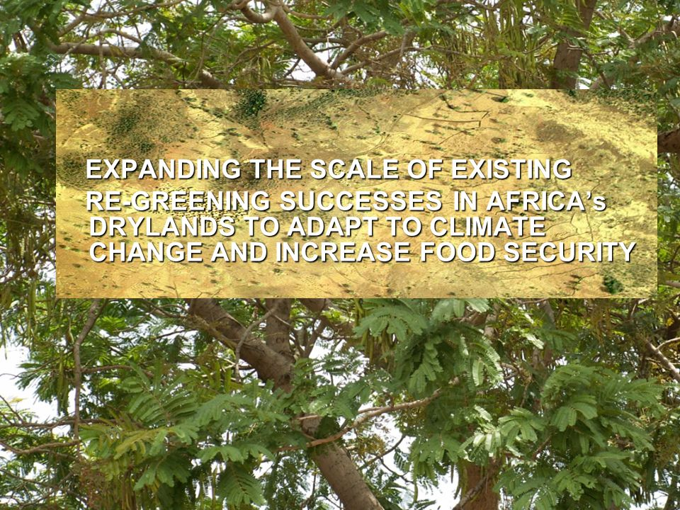 EXPANDING THE SCALE OF EXISTING EXPANDING THE SCALE OF EXISTING RE-GREENING SUCCESSES IN AFRICA's DRYLANDS TO ADAPT TO CLIMATE CHANGE AND INCREASE FOO