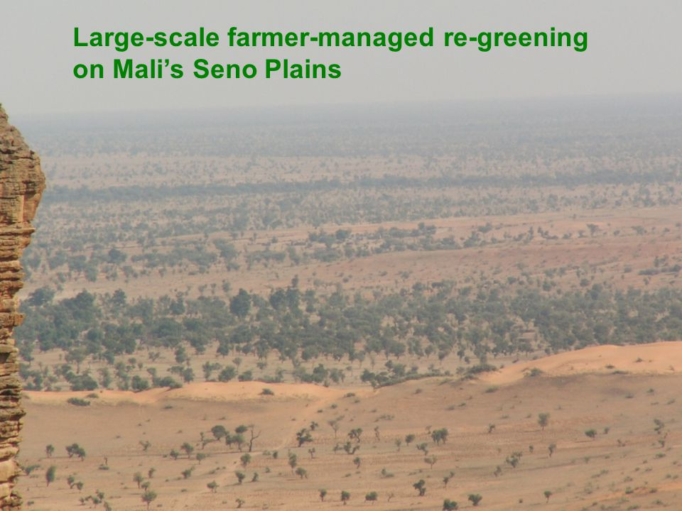 Large-scale farmer-managed re-greening on Mali's Seno Plains