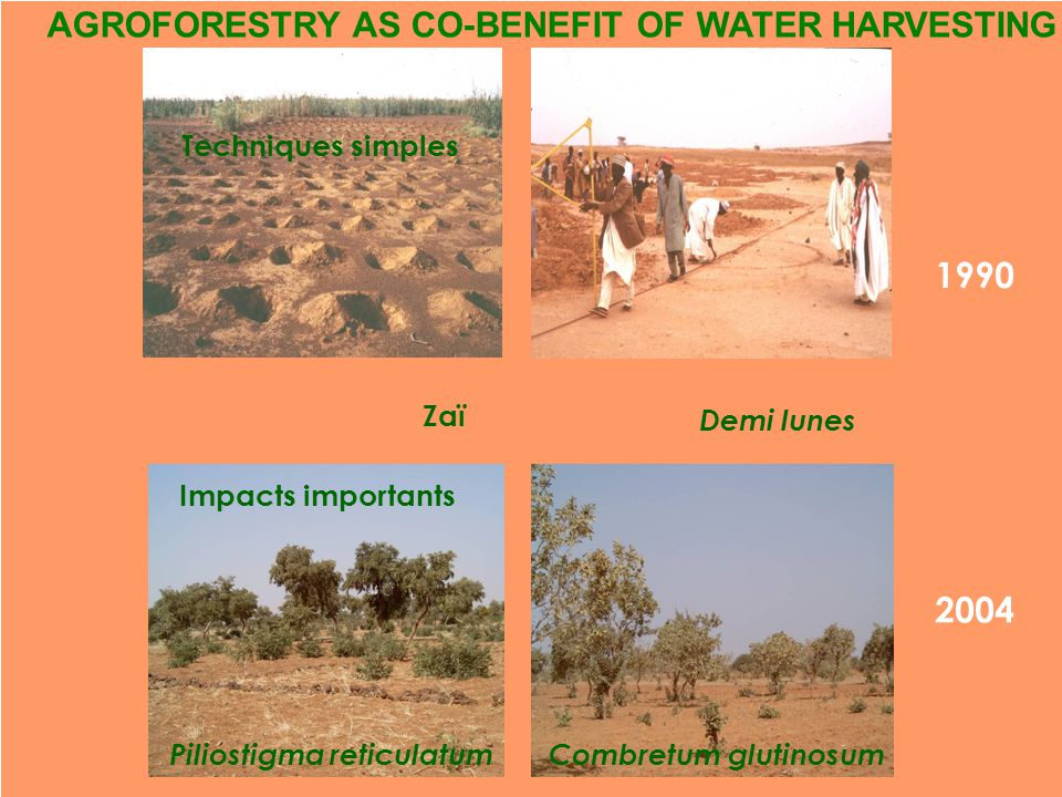 1990 AGROFORESTRY AS CO-BENEFIT OF WATER HARVESTING 2004 Demi lunes Combretum glutinosum Zaï Techniques simples Piliostigma reticulatum Impacts importants