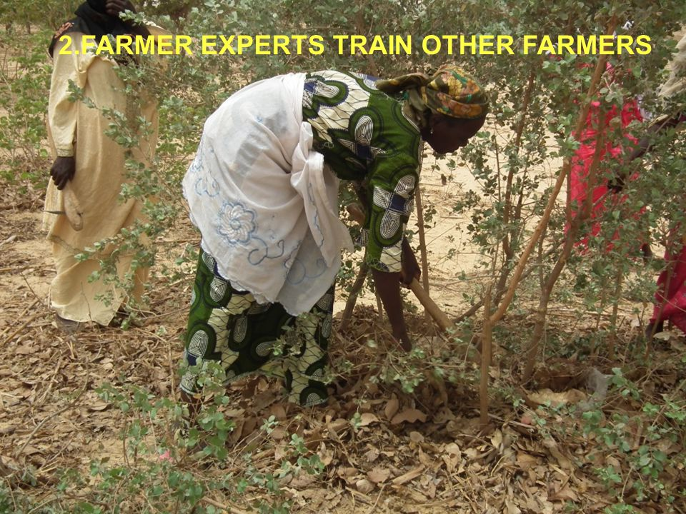 2.FARMER EXPERTS TRAIN OTHER FARMERS