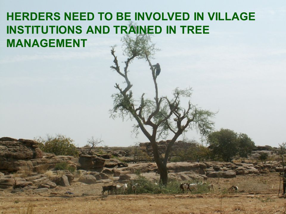HERDERS NEED TO BE INVOLVED IN VILLAGE INSTITUTIONS AND TRAINED IN TREE MANAGEMENT
