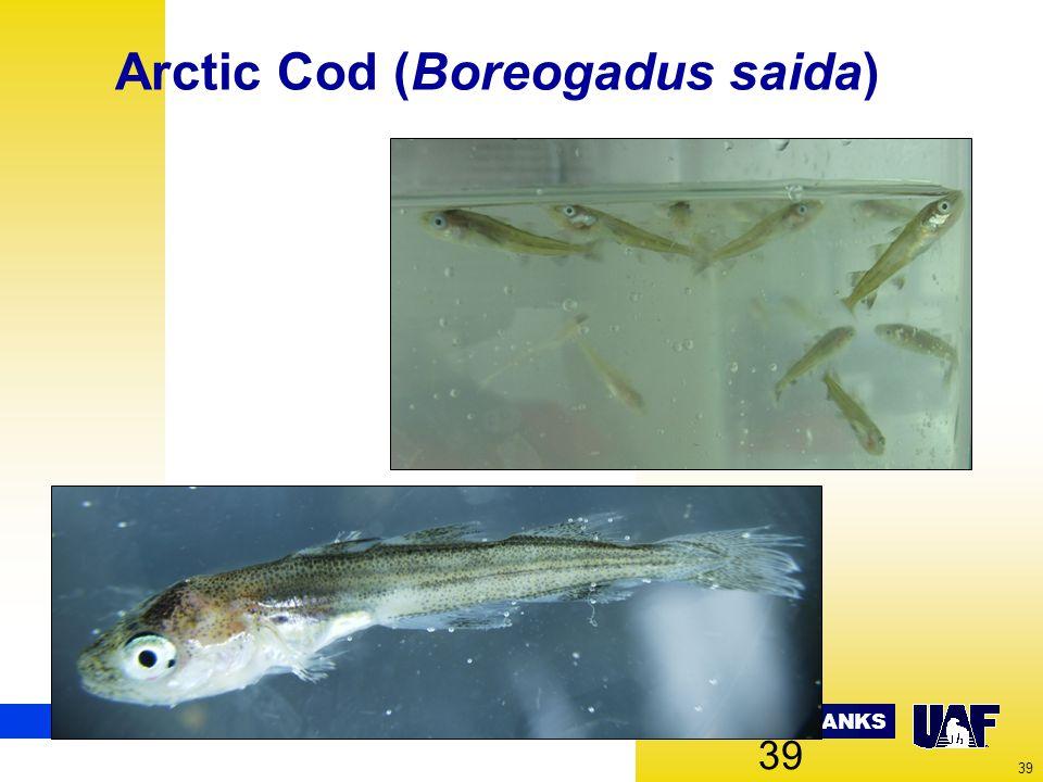 UNIVERSITY OF ALASKA FAIRBANKS 39 Arctic Cod (Boreogadus saida) 39