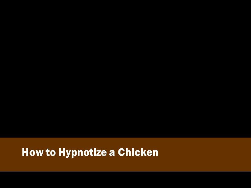 How to Hypnotize a Chicken