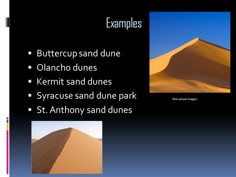 Examples  Buttercup sand dune  Olancho dunes  Kermit sand dunes  Syracuse sand dune park  St. Anthony sand dunes Not actual images