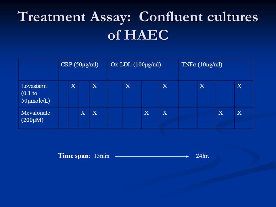 Treatment Assay: Confluent cultures of HAEC CRP (50μg/ml)Ox-LDL (100μg/ml)TNFα (10ng/ml) Lovastatin (0.1 to 50μmole/L) XXXXXX Mevalonate (200μM) XXXXXX Time span : 15min24hr.