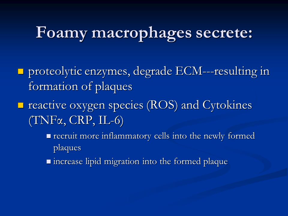 Foamy macrophages secrete: proteolytic enzymes, degrade ECM---resulting in formation of plaques proteolytic enzymes, degrade ECM---resulting in formation of plaques reactive oxygen species (ROS) and Cytokines (TNFα, CRP, IL-6) reactive oxygen species (ROS) and Cytokines (TNFα, CRP, IL-6) recruit more inflammatory cells into the newly formed plaques recruit more inflammatory cells into the newly formed plaques increase lipid migration into the formed plaque increase lipid migration into the formed plaque