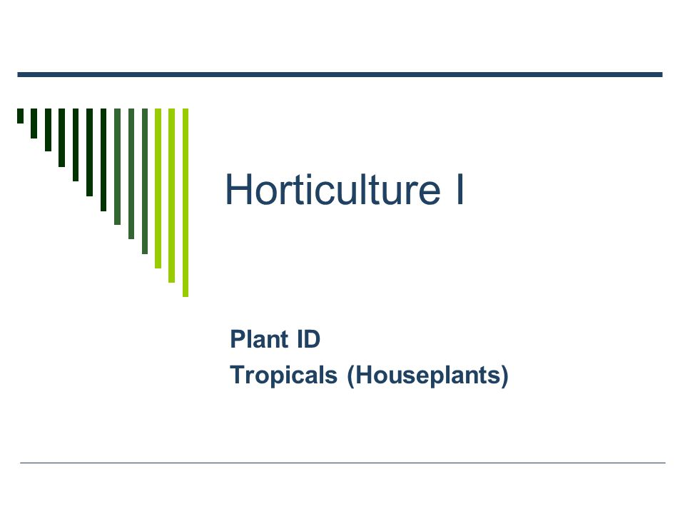 Horticulture I Plant ID Tropicals (Houseplants)