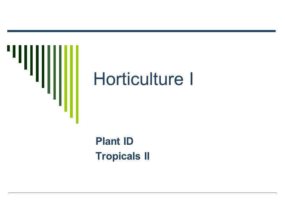 Horticulture I Plant ID Tropicals II