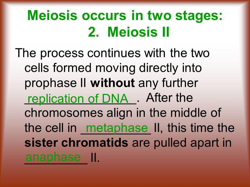 Meiosis occurs in two stages: 2.