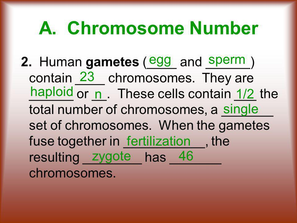 A.Chromosome Number 2. Human gametes (____ and ______) contain ____ chromosomes.