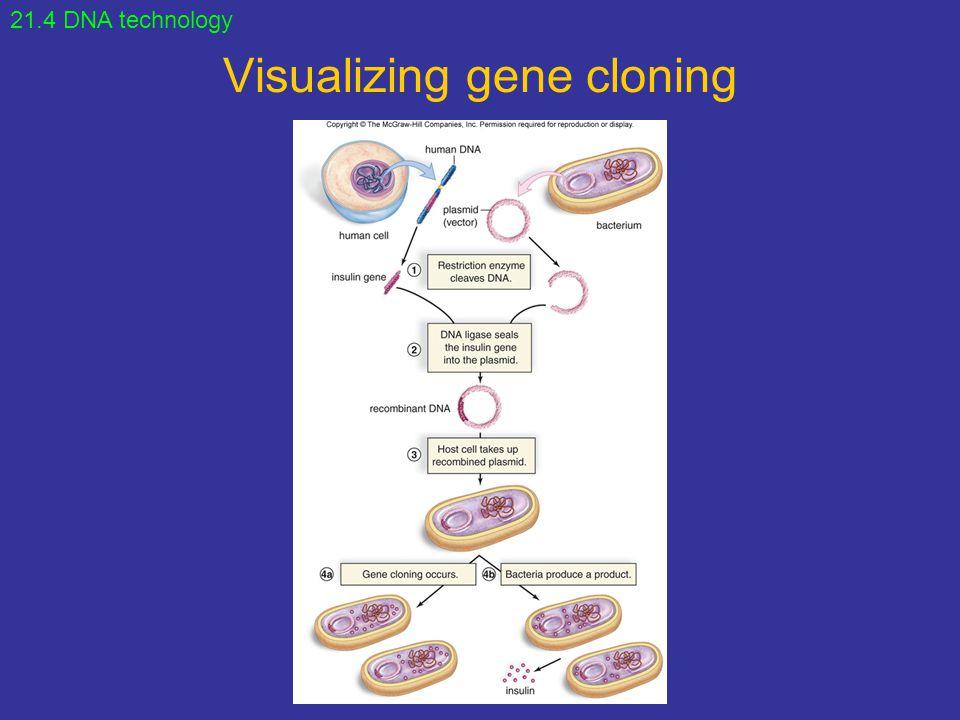 Visualizing gene cloning 21.4 DNA technology