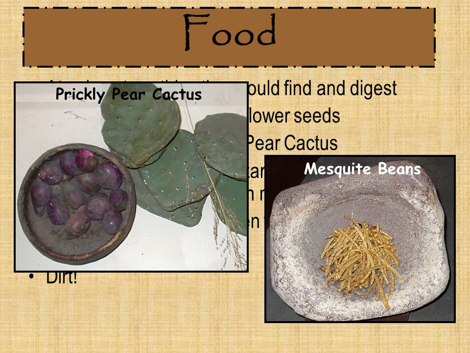 Food Ate almost anything they could find and digest Pecans, acorns, nuts, sunflower seeds Mesquite beans & Prickly Pear Cactus Rabbits, turtles, snake