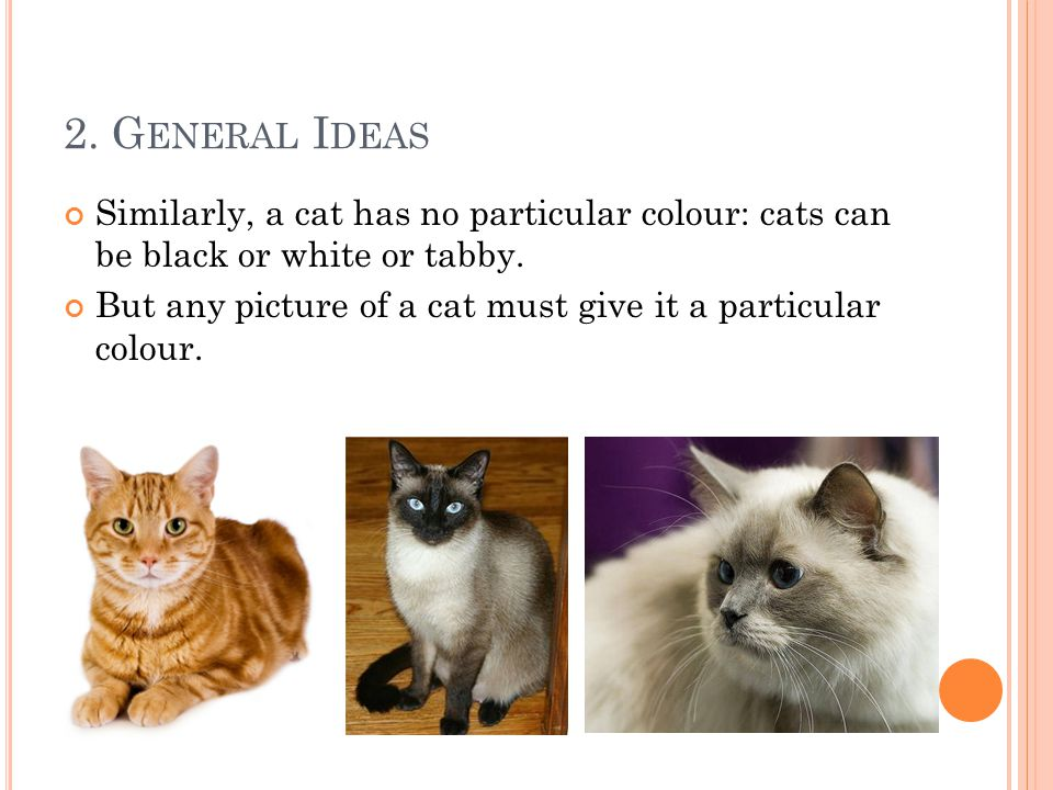 Similarly, a cat has no particular colour: cats can be black or white or tabby.