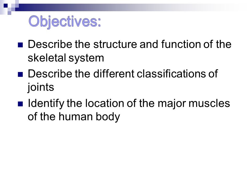 Describe the structure and function of the skeletal system Describe the different classifications of joints Identify the location of the major muscles