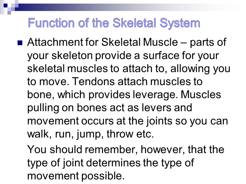 Attachment for Skeletal Muscle – parts of your skeleton provide a surface for your skeletal muscles to attach to, allowing you to move. Tendons attach