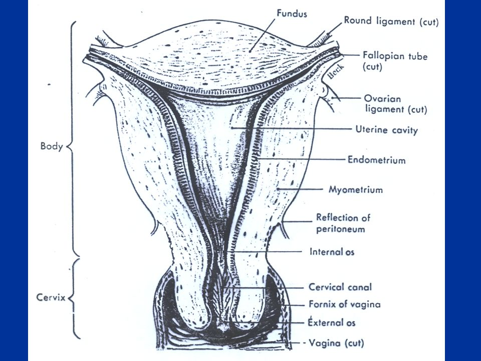 Immature uterus is resistant to oxytocin.Contract uterine smooth muscle only at term.