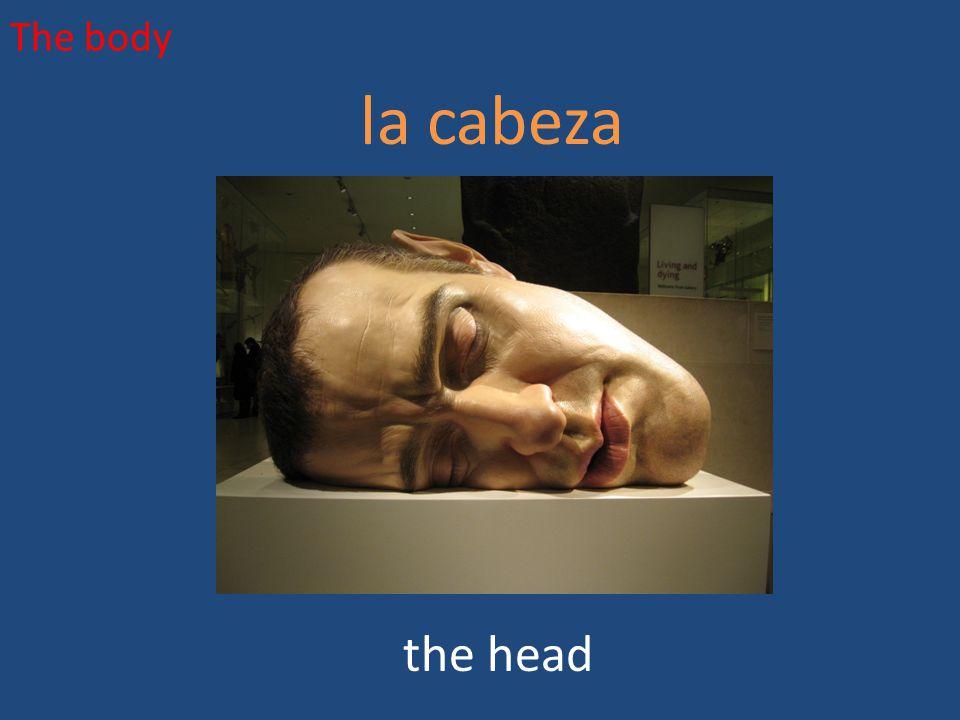 The body la cabeza the head