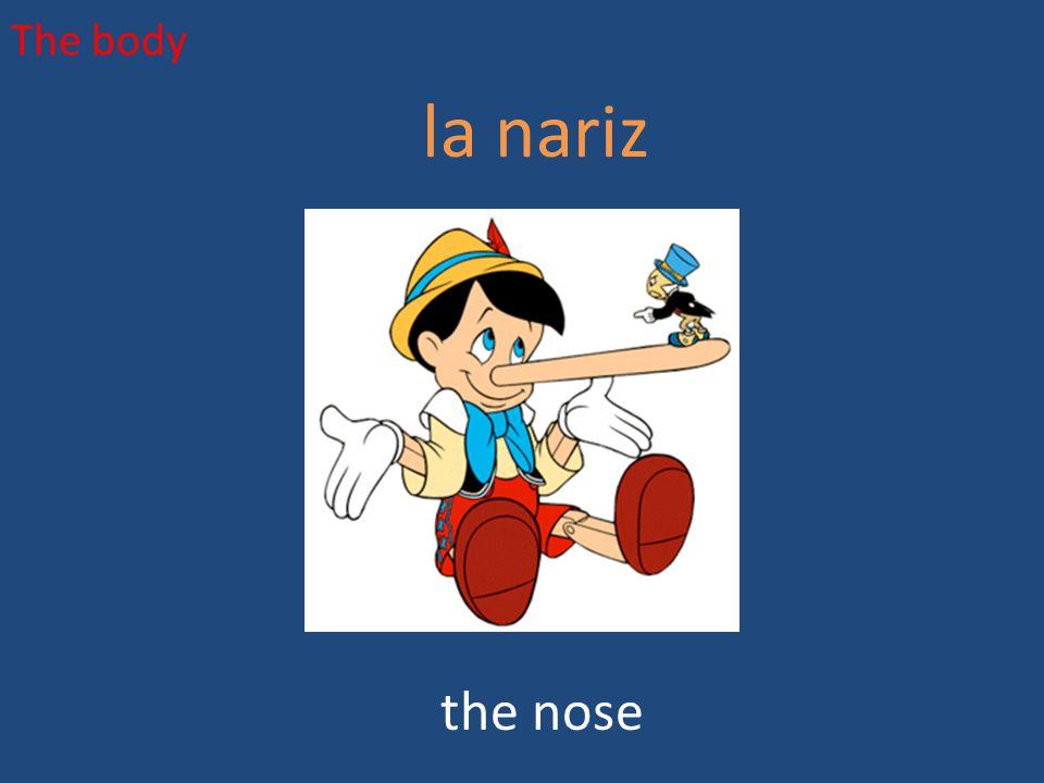 The body la nariz the nose