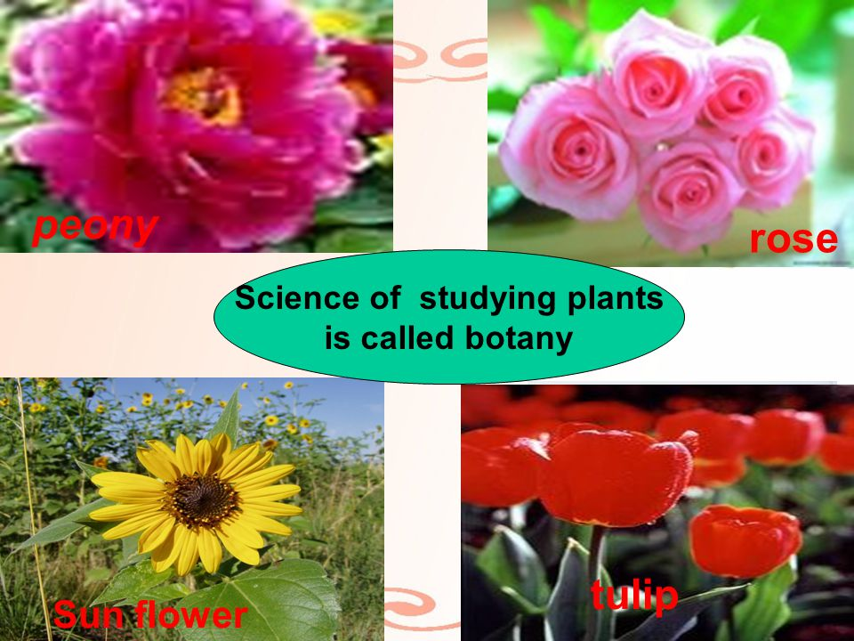 peony tulip rose Sun flower Science of studying plants is called botany