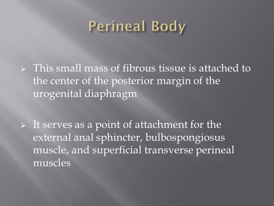  This small mass of fibrous tissue is attached to the center of the posterior margin of the urogenital diaphragm  It serves as a point of attachment for the external anal sphincter, bulbospongiosus muscle, and superficial transverse perineal muscles